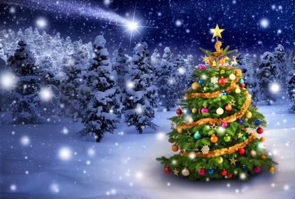 Juletræer til salg
